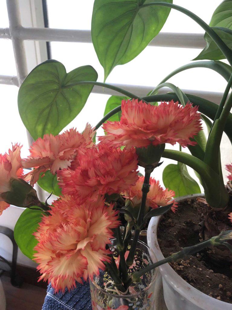 窓際の植物の写真