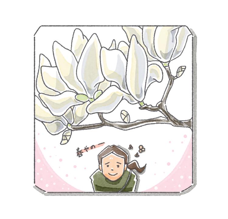 木蓮は上に咲くよね