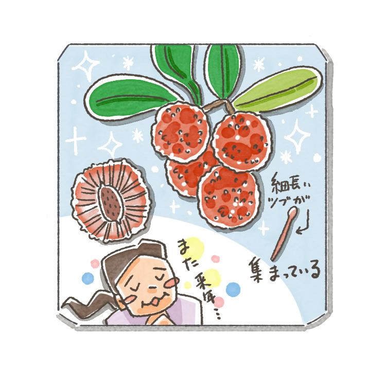 甘酸っぱくて美味しい幻の果物、そうそれはヤマモモ