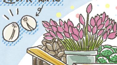 蓮の花の実