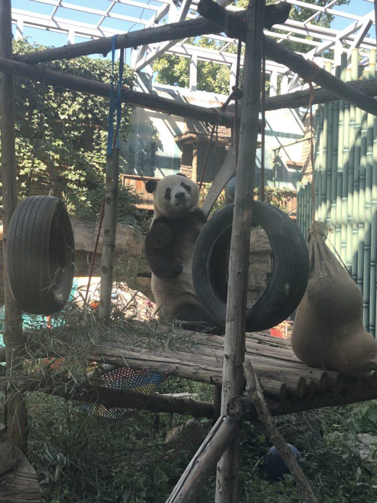 パンダを見に「北京動物園」へ行ってきた。