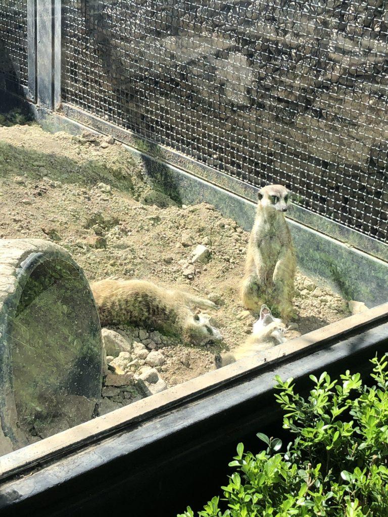 パンダ以外の動物達
