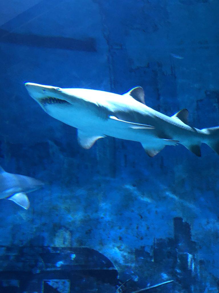 マナティがいたよ・・・「北京海洋館」